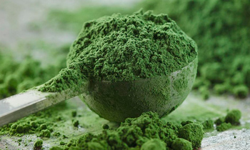 The origin of matcha tea